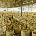 Estoque-de-Concentrado-Vermiculita-São-Luís-de-Montes-Belos-GO
